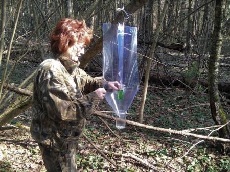 Лесопатологи приступили к наблюдениям за популяциями короедов в лесах Подмосковья